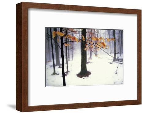 Quiet Woods-David Winston-Framed Art Print
