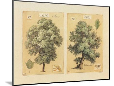 ?rable et Ch?ne-Laurence David-Mounted Art Print