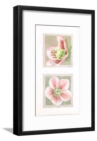 Hélébores I-Laurence David-Framed Art Print