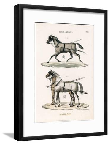 Harnais Américains--Framed Art Print