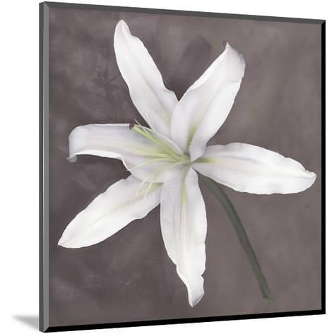 White Lily-Erin Clark-Mounted Giclee Print