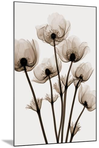 Windflowers-Steven N^ Meyers-Mounted Art Print