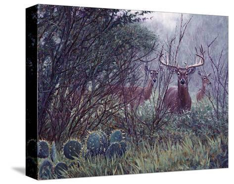 Lone Star Whitetail-John Banovich-Stretched Canvas Print