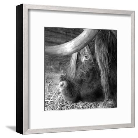 The Buffalo-Carl Ellie-Framed Art Print