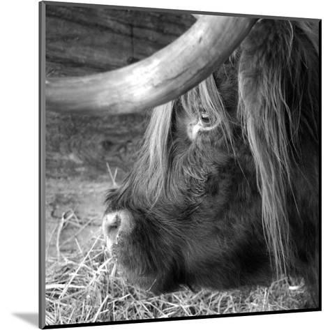 The Buffalo-Carl Ellie-Mounted Art Print