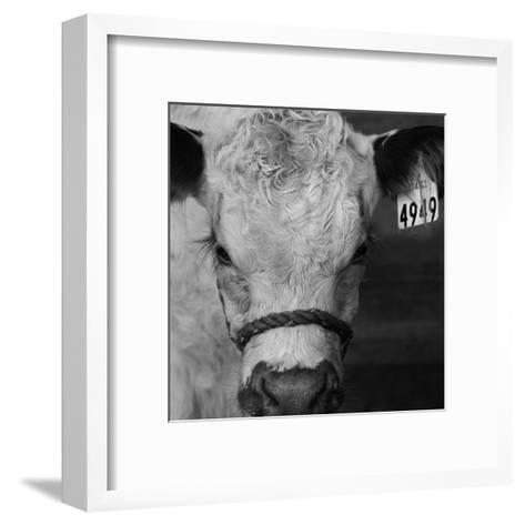 The Calf-Carl Ellie-Framed Art Print