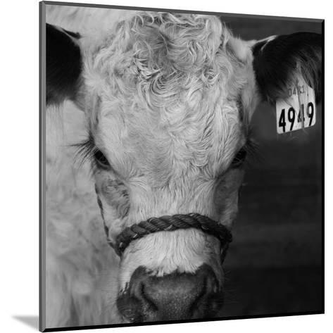 The Calf-Carl Ellie-Mounted Art Print