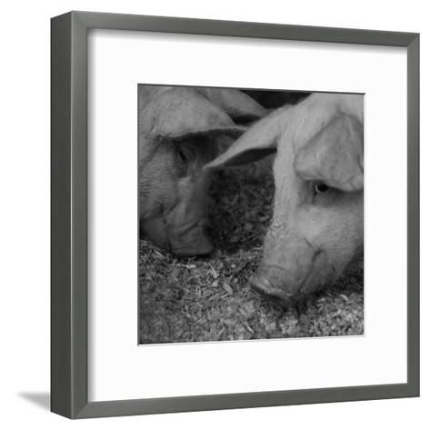 The Pig-Carl Ellie-Framed Art Print