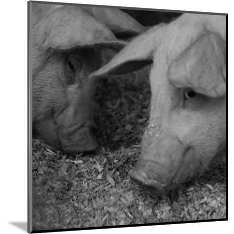 The Pig-Carl Ellie-Mounted Art Print