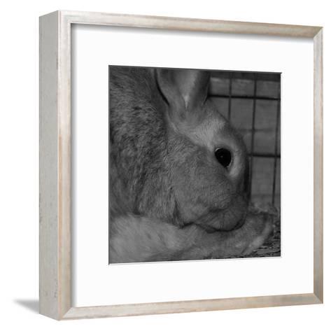 The Rabbit-Carl Ellie-Framed Art Print