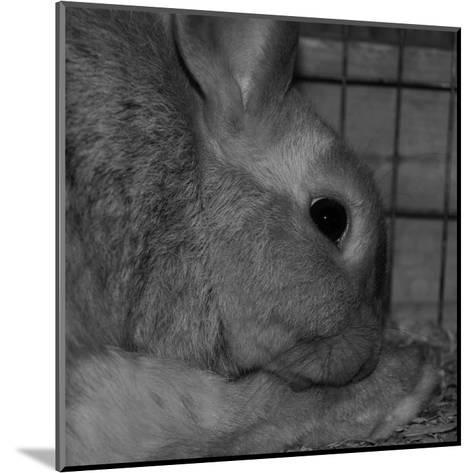 The Rabbit-Carl Ellie-Mounted Art Print