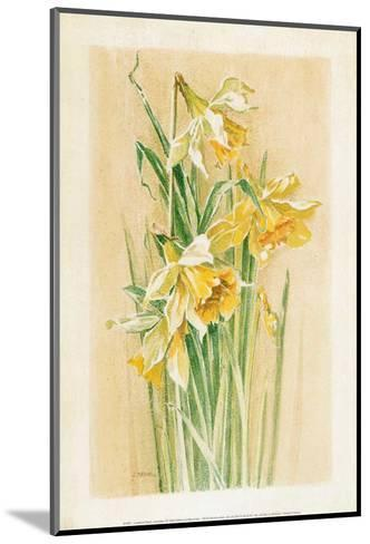 Jonquilles I-Laurence David-Mounted Art Print