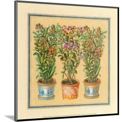 Flower II--Mounted Art Print