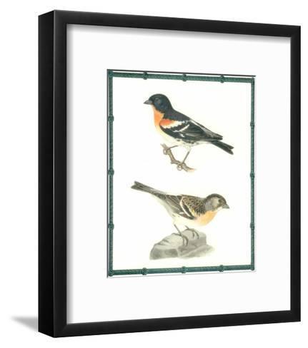Ornitologica II--Framed Art Print