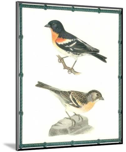 Ornitologica II--Mounted Art Print