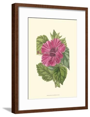 Antique Hibiscus II-Drake-Framed Art Print