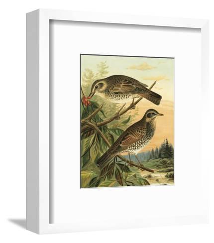 Small Woodland Birds II--Framed Art Print