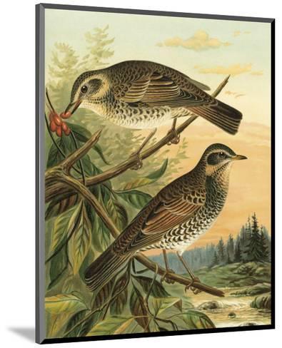 Small Woodland Birds II--Mounted Art Print