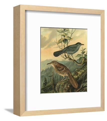 Small Woodland Birds IV--Framed Art Print