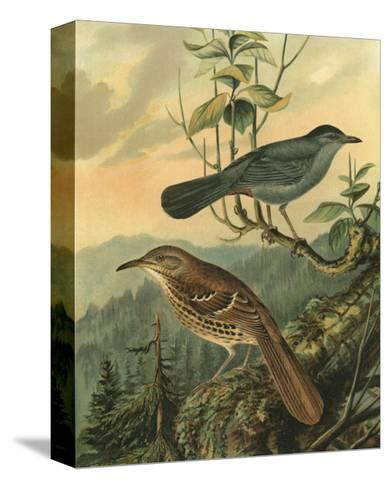 Small Woodland Birds IV--Stretched Canvas Print