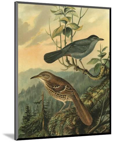 Small Woodland Birds IV--Mounted Art Print
