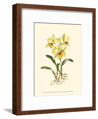 Yellow Cattleya Orchid-Joy Waldman-Framed Art Print