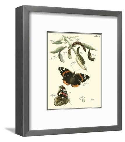 Butterfly Metamorphosis IV--Framed Art Print