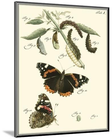 Butterfly Metamorphosis IV--Mounted Art Print