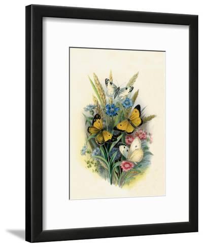 Butterflies and Moths, no. 3--Framed Art Print