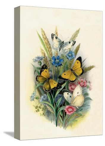 Butterflies and Moths, no. 3--Stretched Canvas Print