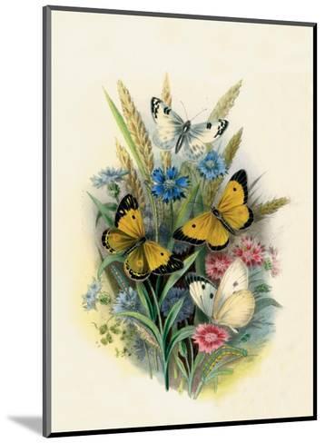 Butterflies and Moths, no. 3--Mounted Art Print
