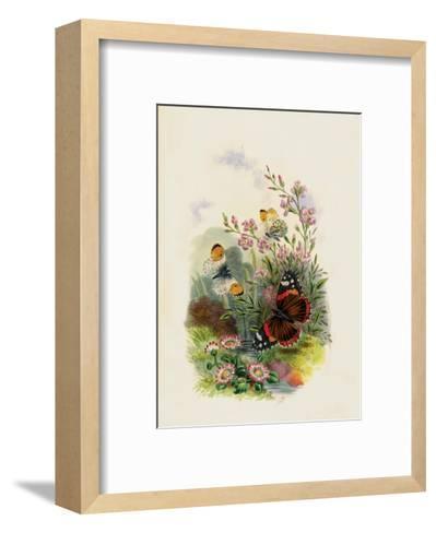 Butterflies and Moths, no. 4--Framed Art Print