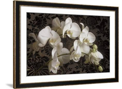 Bountiful Orchids-Donna Geissler-Framed Art Print