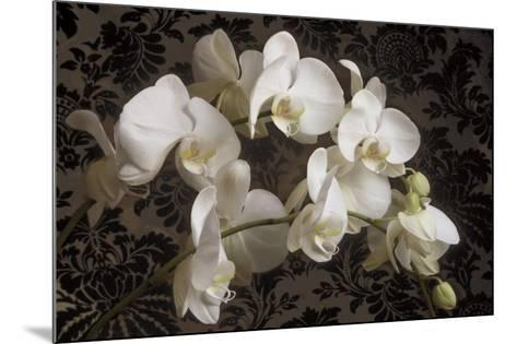 Bountiful Orchids-Donna Geissler-Mounted Art Print