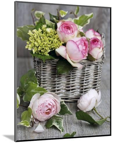 Roses-Catherine Beyler-Mounted Art Print