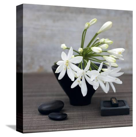 Agapanthus-Catherine Beyler-Stretched Canvas Print