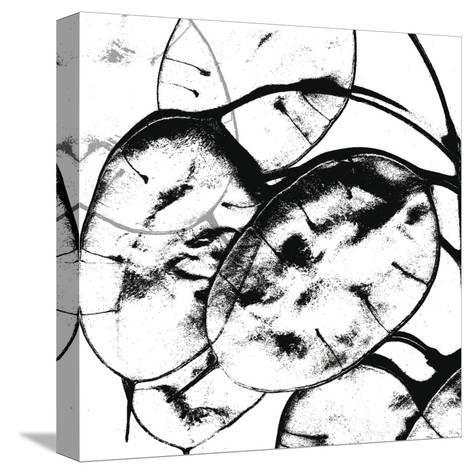 Silver Dollars II-Erin Clark-Stretched Canvas Print