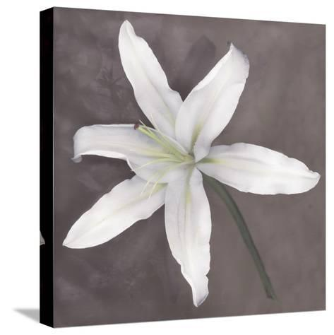 White Lily-Erin Clark-Stretched Canvas Print
