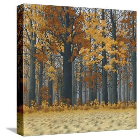 Autumn Wood-Timothy Arzt-Stretched Canvas Print
