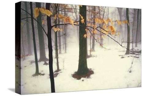 Quiet Woods-David Winston-Stretched Canvas Print