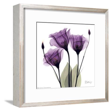 Royal Purple Gentian Trio-Albert Koetsier-Framed Art Print