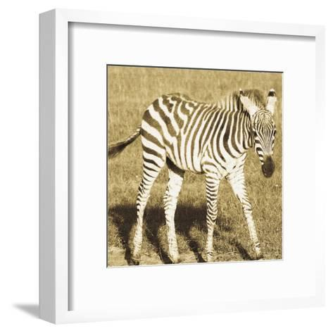 Young Zebra-Susann Parker-Framed Art Print