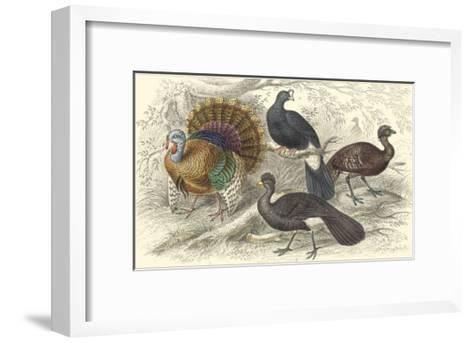 Turkey & Curassows-Julius Stewart-Framed Art Print