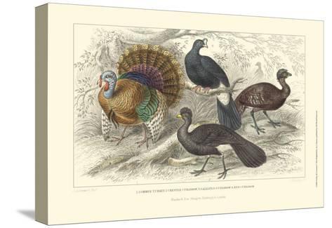 Turkey & Curassows-Julius Stewart-Stretched Canvas Print