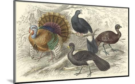 Turkey & Curassows-Julius Stewart-Mounted Art Print