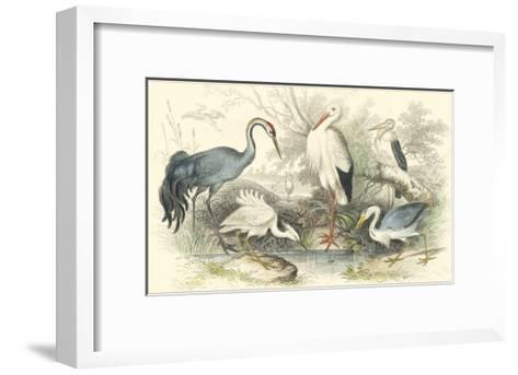 Herons, Egrets & Cranes-Julius Stewart-Framed Art Print