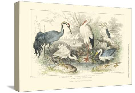 Herons, Egrets & Cranes-Julius Stewart-Stretched Canvas Print