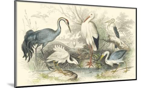 Herons, Egrets & Cranes-Julius Stewart-Mounted Art Print