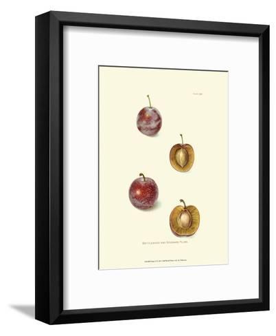 Plums II--Framed Art Print