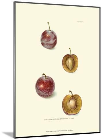 Plums II--Mounted Art Print